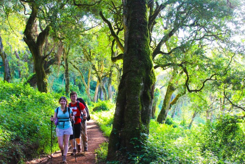 Walkers on Kilimanjaro in the forest