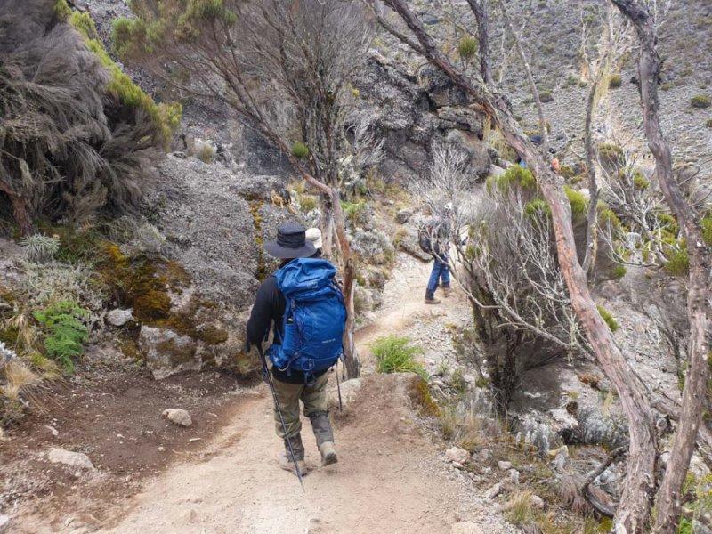 Man wearing pack walking along trail through trees on Kilimanjaro