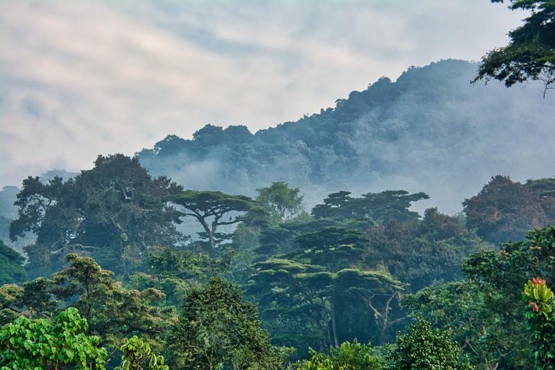 Mist among the mountains of Bwindi Impenetrable National Park