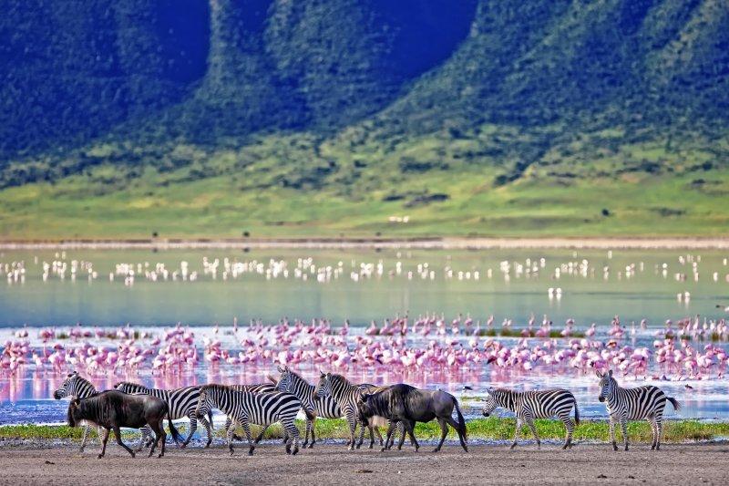 Zebras, flamingoes and wildebeests in Ngorongoro Crater
