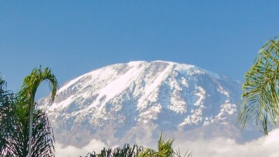 Mount Kilimanjaro seen from a distance with subtropical vegetation framing the snowy peak in the distance