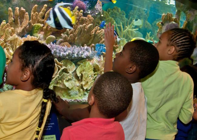 Aquarium Card