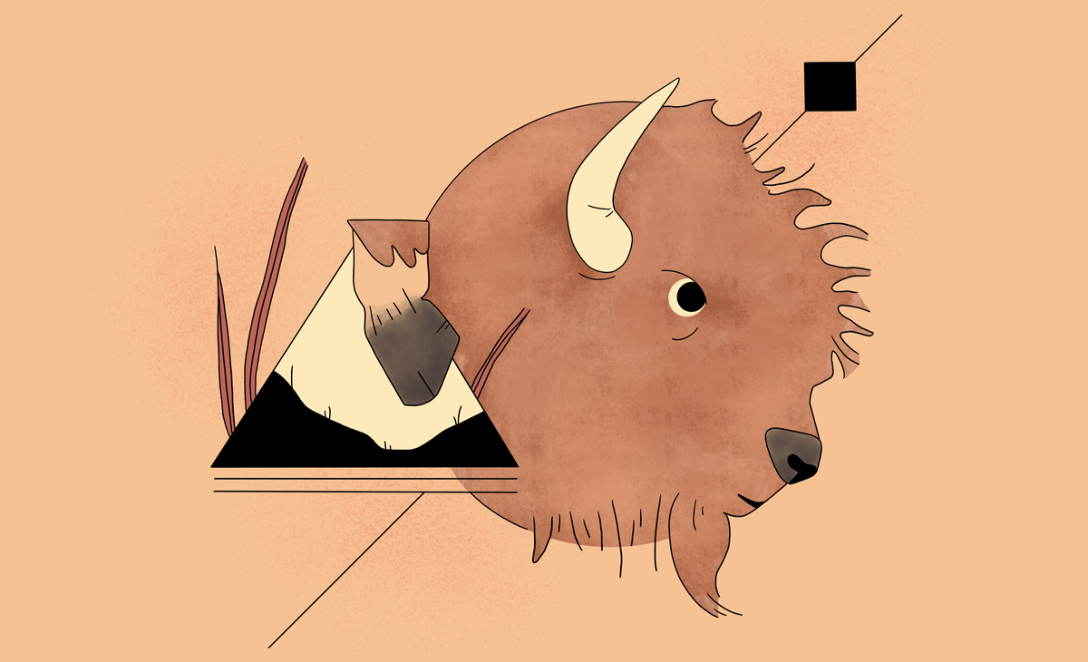 Cover Image for What makes bison a keystone species?