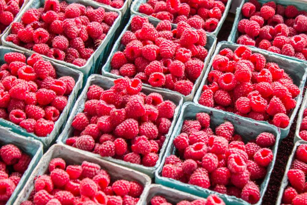 Raspberries in cardboard boxes.