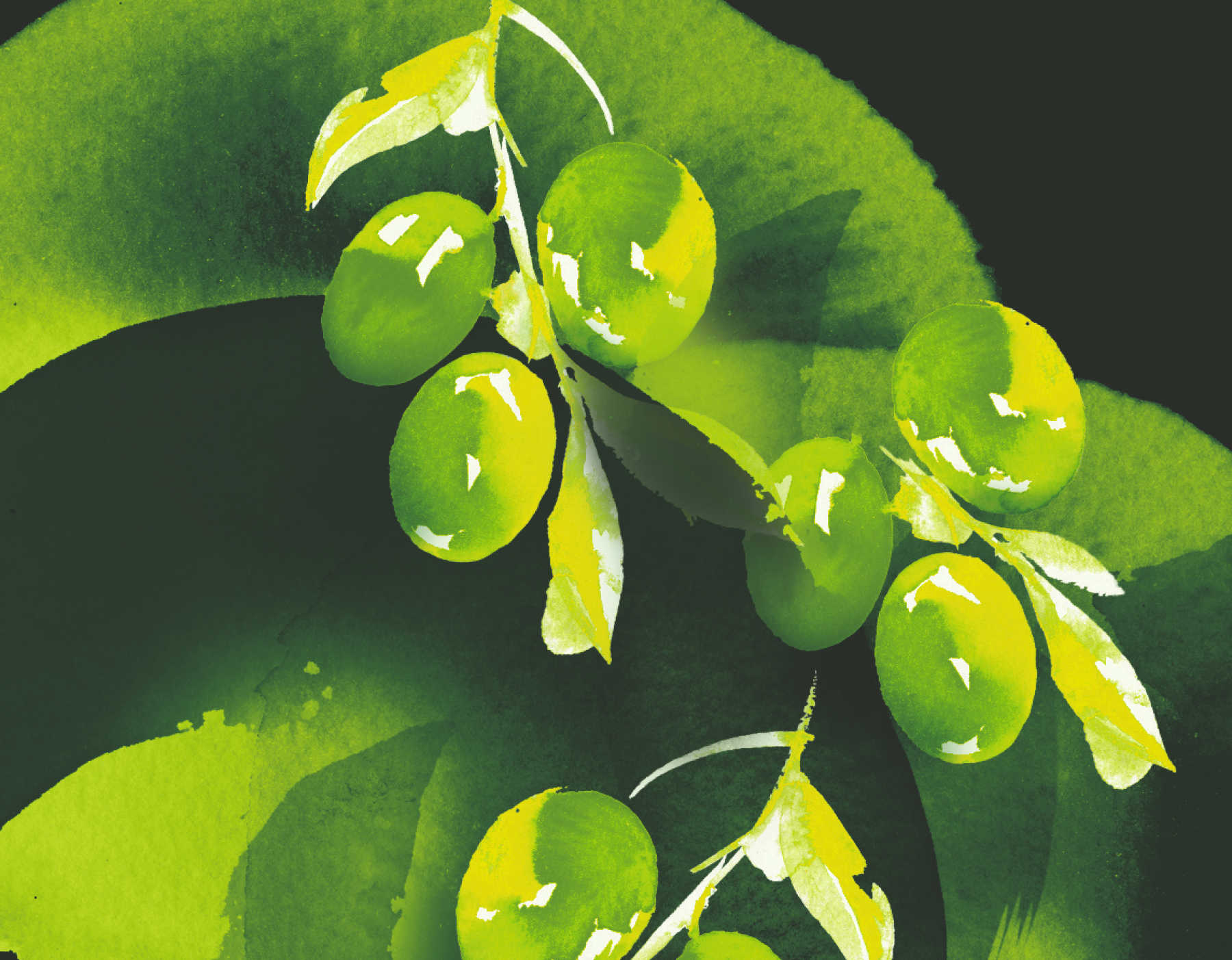 grapes illustrations green