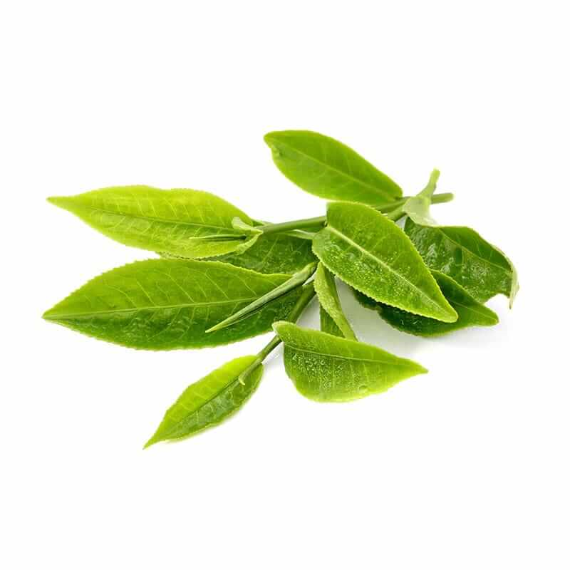 ingredient-green-tea-leaf.jpg