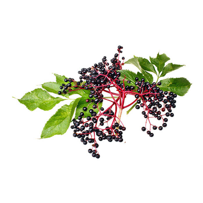ingredient-elderberry.jpg