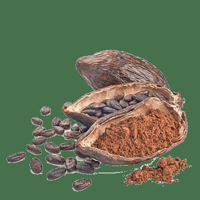 Organic Cacao from Peru