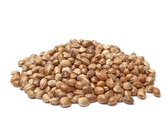 Hemp Protein from Romania