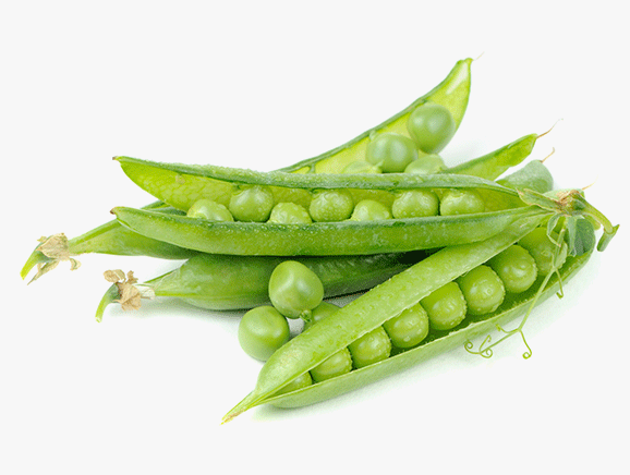 Pea Protein from Spain