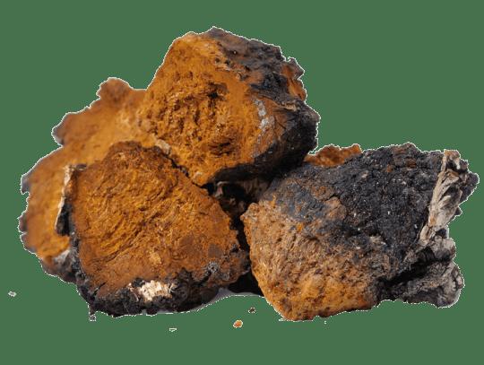 Organic Chaga Mushrooms from China