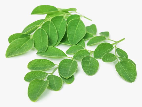 Moringa from Tanzania