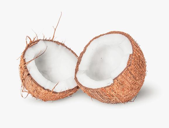 Coconut from Sri Lanka