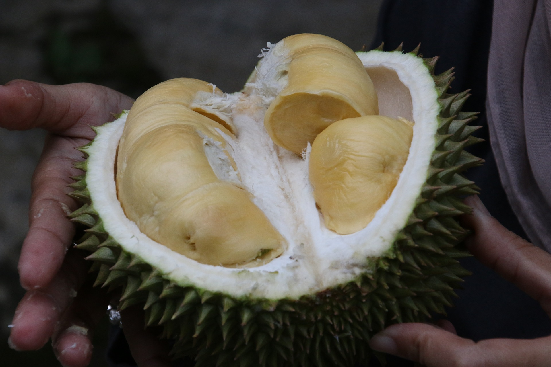 durian-1493310 1920