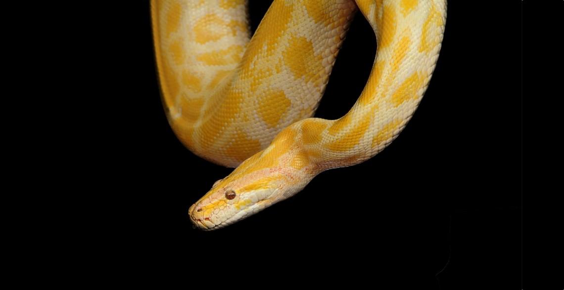 Building a Native Python Interface for /dev/nsm