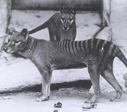 Weird Animals That Went Extinct 6