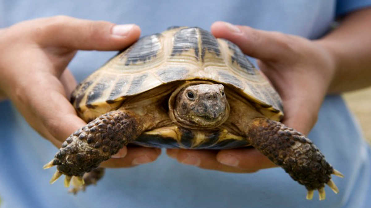 Don T Touch That Turtle Reasons Your Pet Is Dangerous Mom Com