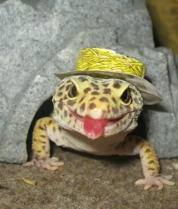 16 Lizards Wearing Little Hats Mom Com
