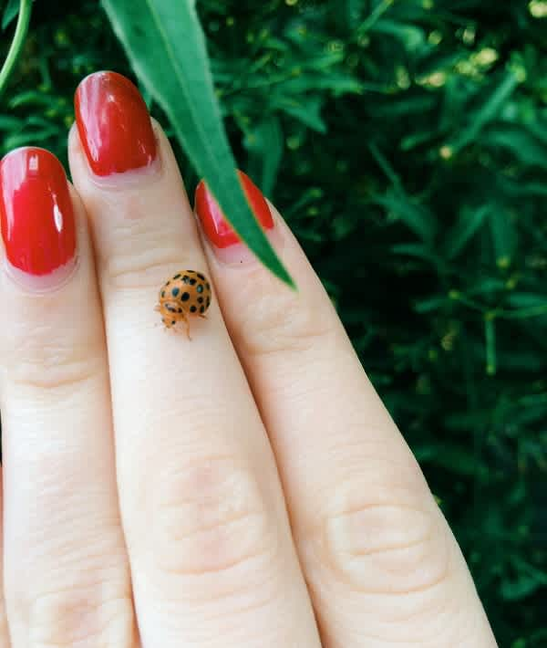 18 Bug Bites and How to Identify Them