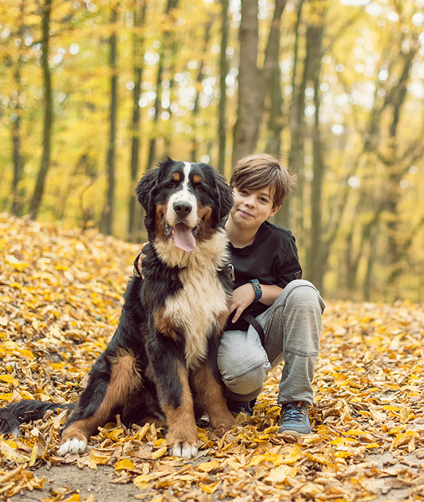 10 Large Dog Breeds That Are Gentle