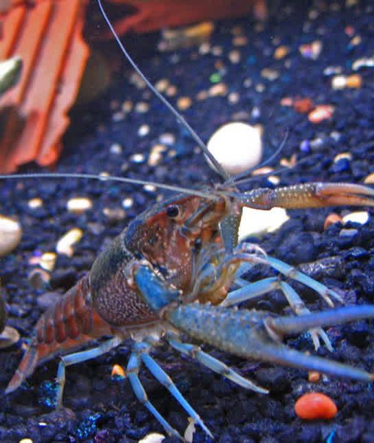 10 Non Fish Aquarium Pets