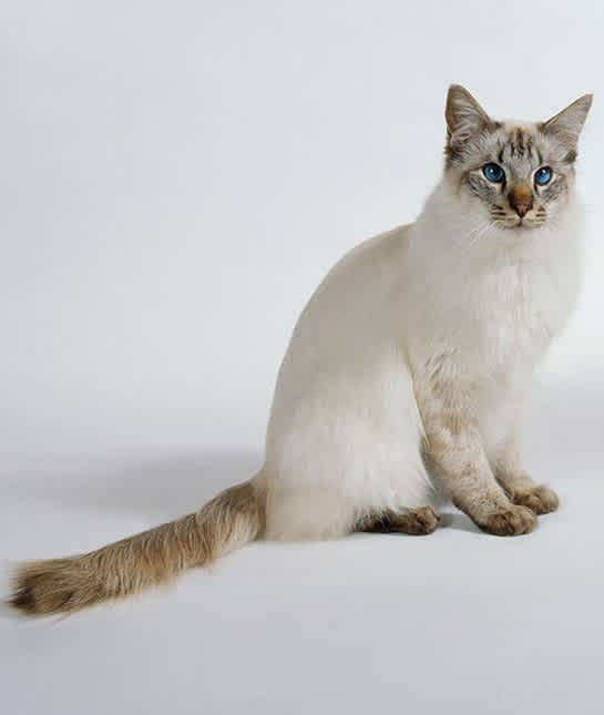 10 Hypoallergenic Cats Mom Com