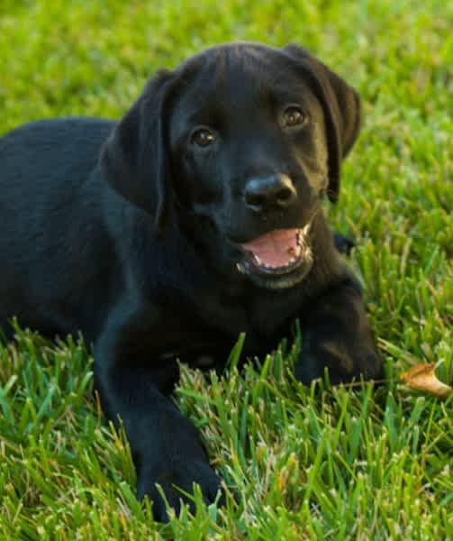 12 Favorite Black Dog Breeds Mom Com