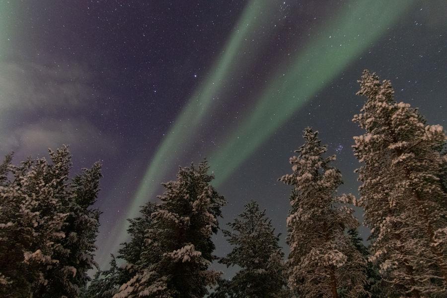 Heikot revontulet tähtitaivaalla kuusien yläpuolella. Kuvattu suurella ISO-luvulla, jonka vuoksi kuvassa on rakeita.