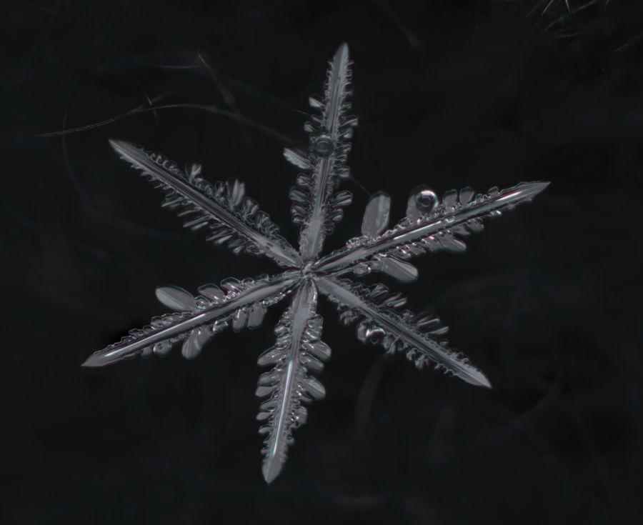 Makrokuva lumihiutaleesta, jossa kaikki eri kuvat ovat yhdistetty yhdeksi tarkaksi kuvaksi, jossa koko hiutale on tarkka.