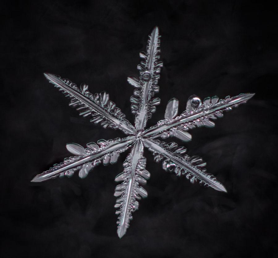 Makrokuva lumihiutaleesta, joka on täysin tarkka, sekä josta on poistettu kaikki roska taustalta.