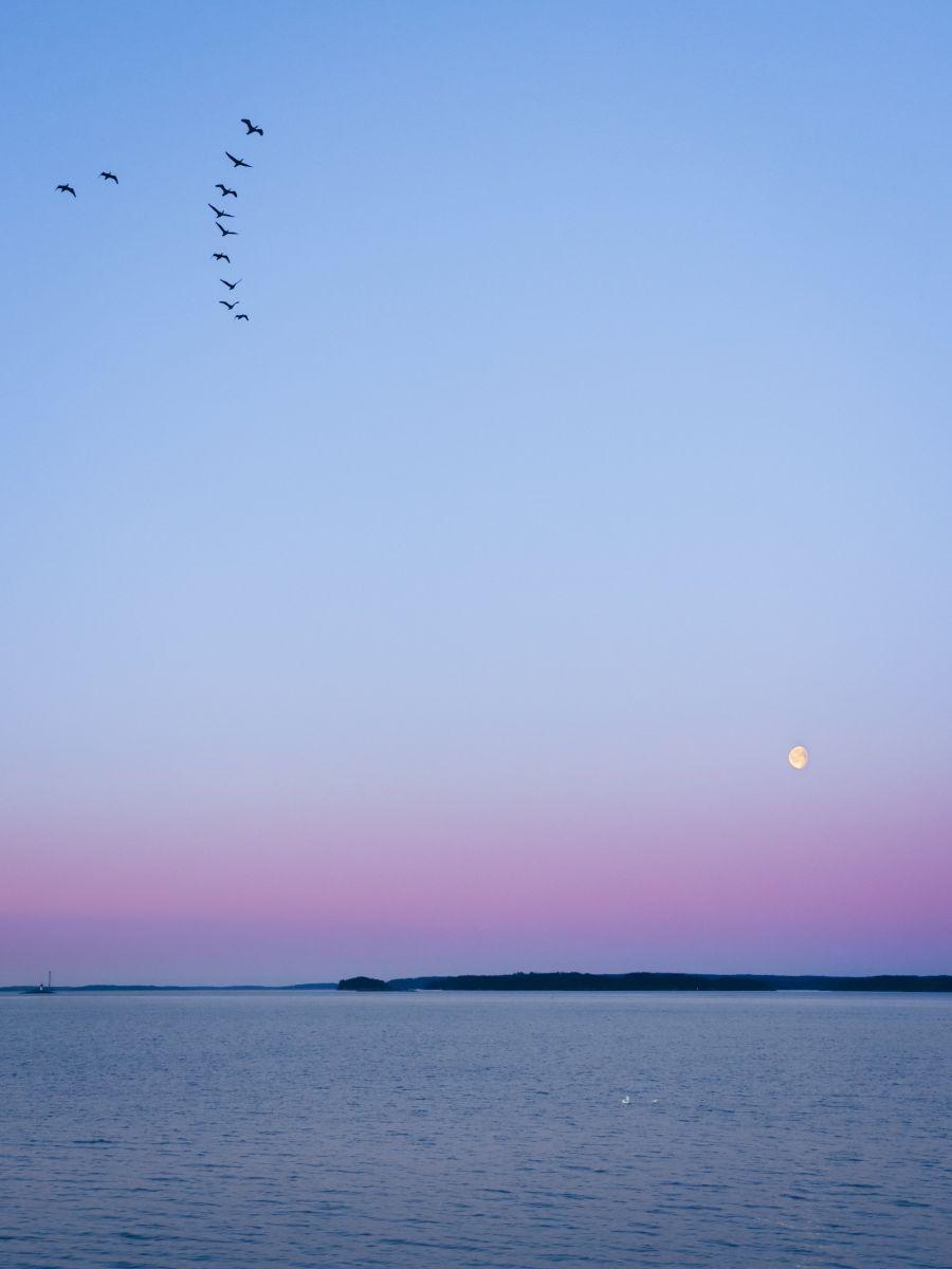 Sininen hetki, linnut lentävät taivaalla ja taustalla näkyy kuu