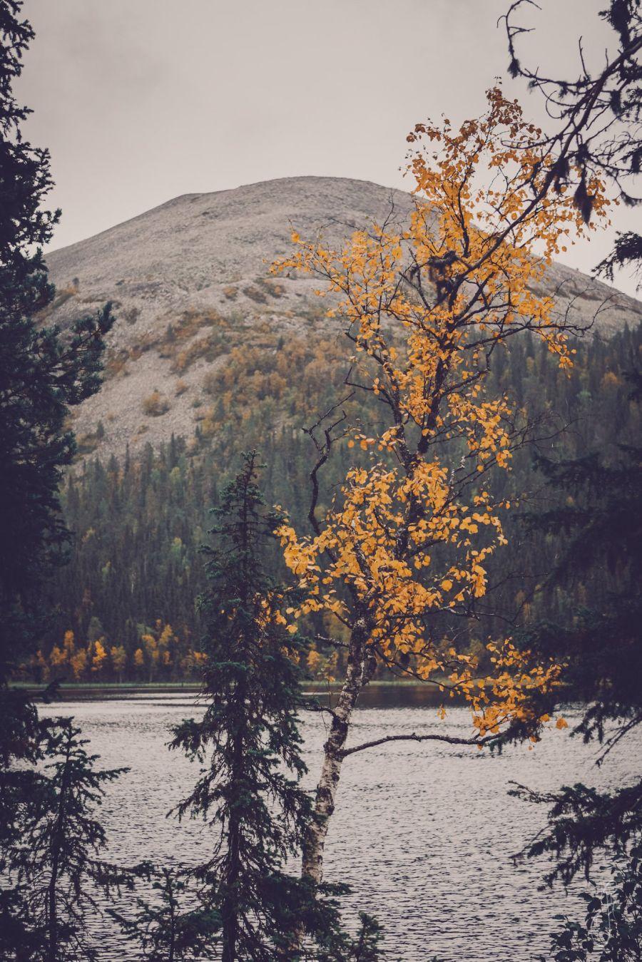 Kuva järven toisella puolella olevasta tunturista