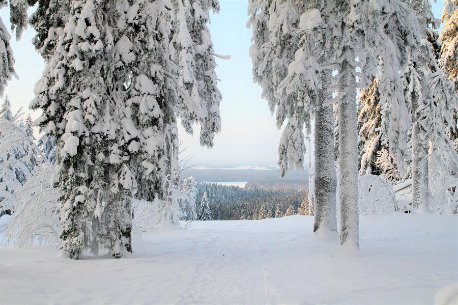 Talvinen metsämaisema korkealla, taustalla avartuu metsämaisema