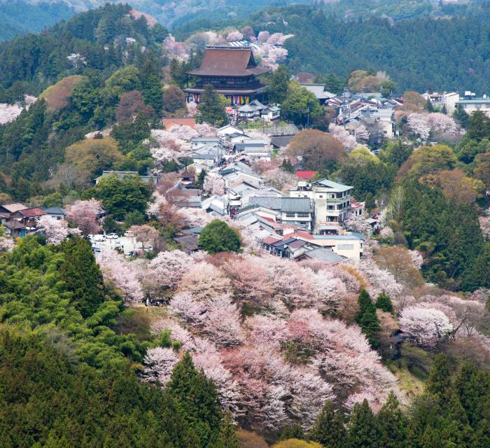 Mt. Yoshino Cherry Blossoms 02