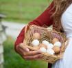 pregnancy-diet-plan-protein-while-pregnant