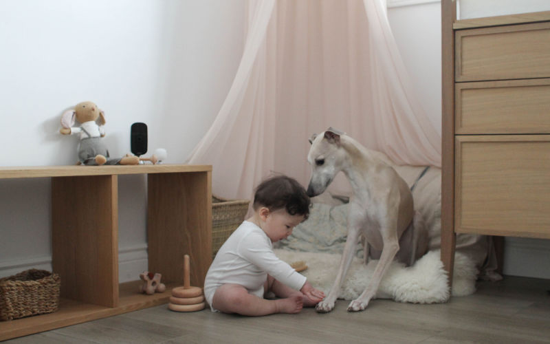 A baby and a dog play together while an ecobee SmartCamera looks on.