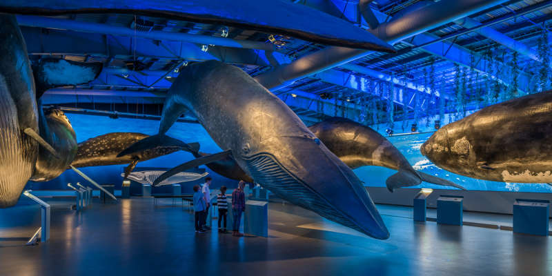 WI01-Whales-of-Iceland-Exhibition