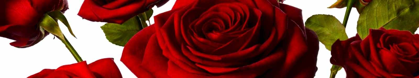 Mr Roses's banner