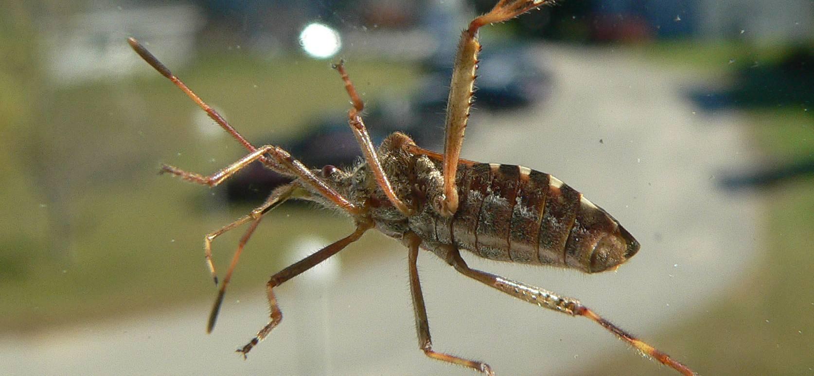 Polacy owad w domach