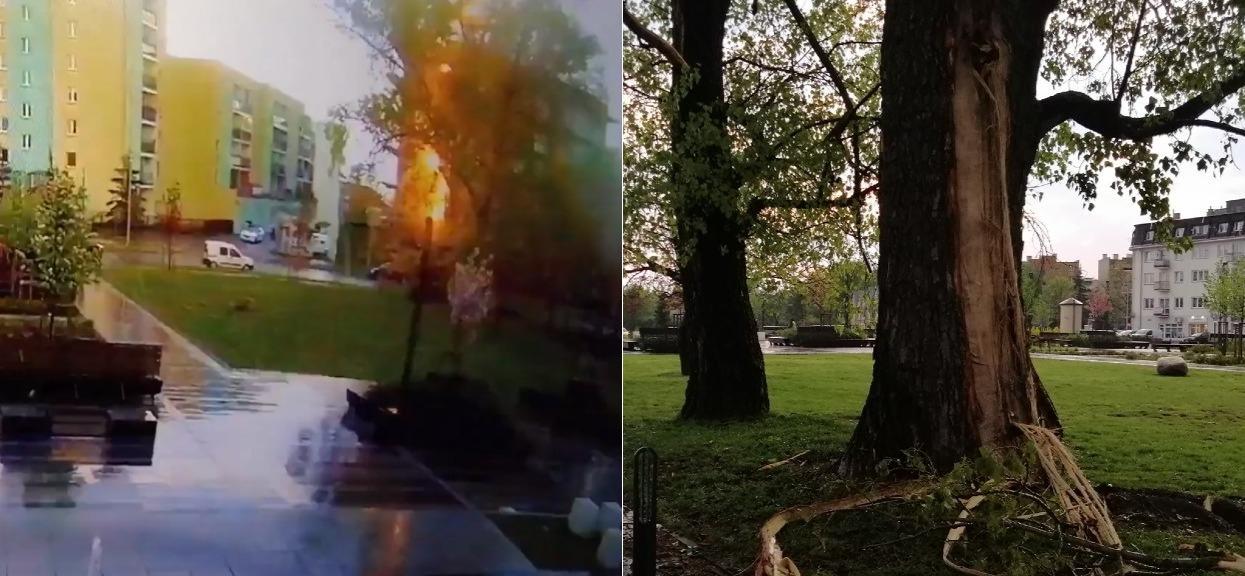 W Wyszkowie piorun uderzył w drzewo na placu miejskim.