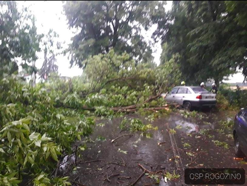 OSP Rogozino pomagało kierowcy, które auto przygniecione zostało przez konar drzewa
