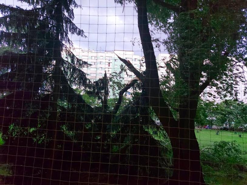 Połamane gałęzie przy bloku na Stegnach