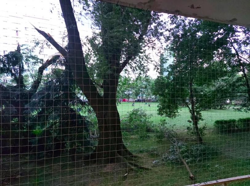 Połamane drzewa na Stegnach