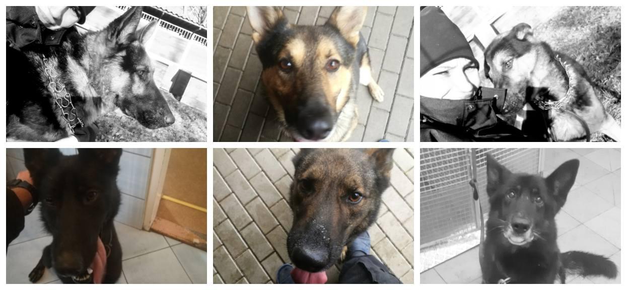 Policyjne psy będą skremowane