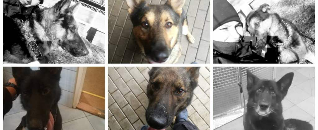 Śmierć policyjnych psów