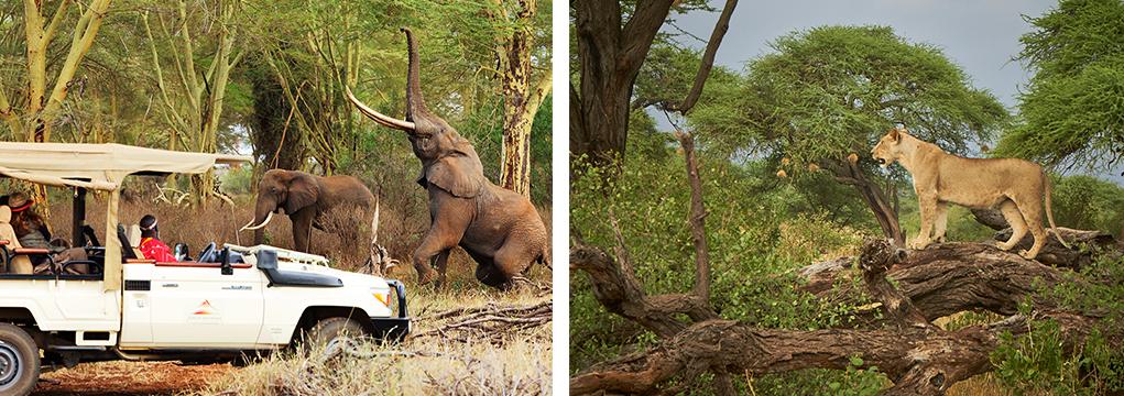 African Safari Family Adventure 2021 24