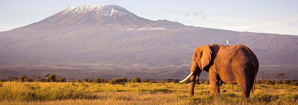 African Safari Family Adventure 2021 22