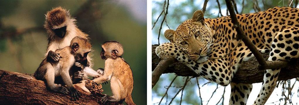 African Safari Family Adventure 2021 8