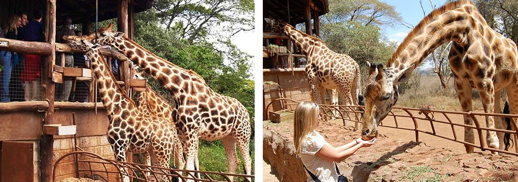 African Safari Family Adventure 2021 4