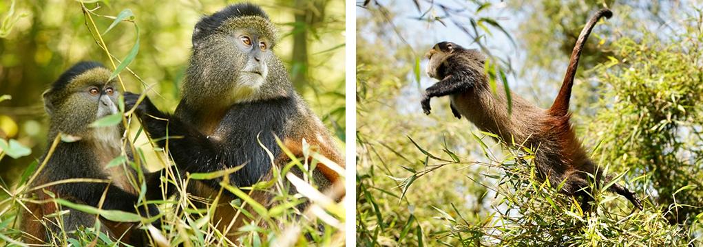 African Safari Family Adventure 2021 37